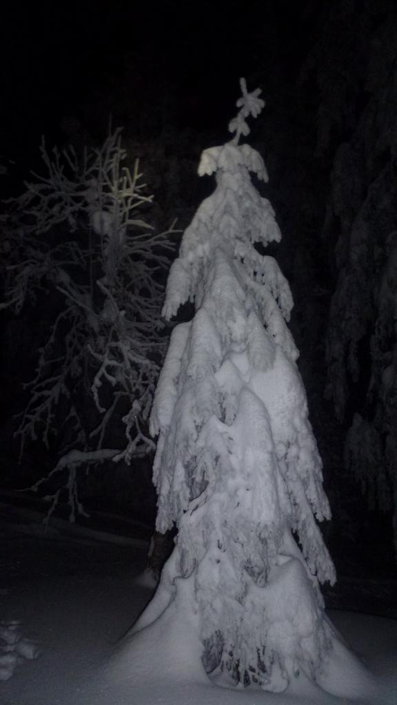 Soirée du 7 février 2015, sapin chargée de neige