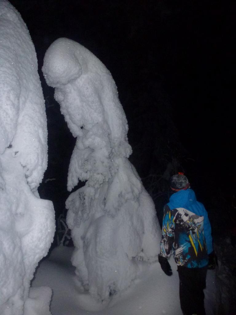 Soirée du 7 février 2015, sapins sous la neige